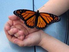 לידה והתפתחות רוחנית