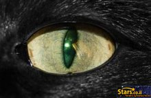 עין הרע