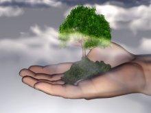 שירת העשבים - טו בשבט בראיה רוחנית