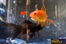 מזל דגים והתאמתו לשאר המזלות
