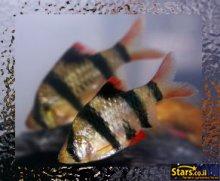 ים האהבה של הדגים